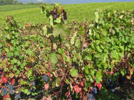Randonnée viticole